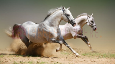 https://thebestfinders.com/2021/07/12/horses-are-stated-to-be-the-noblest-of-creatures-why/