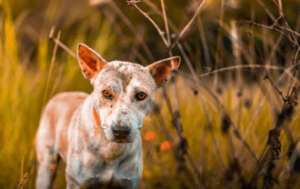 https://thebestfinders.com/2021/08/20/dogs-skin-issues/