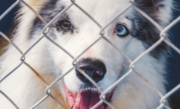 https://thebestfinders.com/2021/08/20/how-to-prevent-a-dog-from-pooping-in-a-cage/