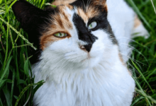 https://thebestfinders.com/how-much-are-calico-cats/